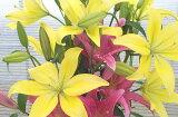 素敵な百合の花束