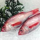 高川物産:のどぐろ(鮮魚)約1kg(クール冷蔵便)翌日配達可能エリア(北陸、関東、中部、近畿地方)のみのお取扱いとなります