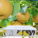 ※予約受付※ 呉羽梨「幸水」14玉(中)・5kg/富山のエコファーマー認定農家よりを直送 ※季節商品