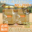 生マヌカハニー【MG200+】酵素が生きている天然マヌカ蜂蜜[ワイルドハニー] 340g×2本set【送料無料】