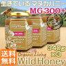 【限定入荷】ワイルドハニー MG(MGO)300+ (UMF/MGS11〜12+)酵素が生きているマヌカハニー・生タイプ 1,020g(340g×3) 送料無料