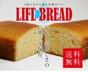 LIFE BREAD ライフブレッド 1個 【長期保存】【非常食】【携行食】 【送料無料】