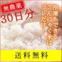がっつり 1ヶ月 コミコミ ゼンライス IKKOさんも使っている石井さんの乾燥こんにゃく米30袋 送料無料 こんにゃくごはん ダイエット米 しらたき米 ※マンナンヒカリではありません 糖質制限ダイエットに!おにぎらずもOK asu