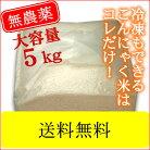 石井さんの乾燥 こんにゃく米 5キロ こんにゃくごはんダイエット米ご飯にご利用下さい【送…