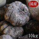 平成28年度秋収穫の国産こんにゃく芋 10キロ 業務用にも