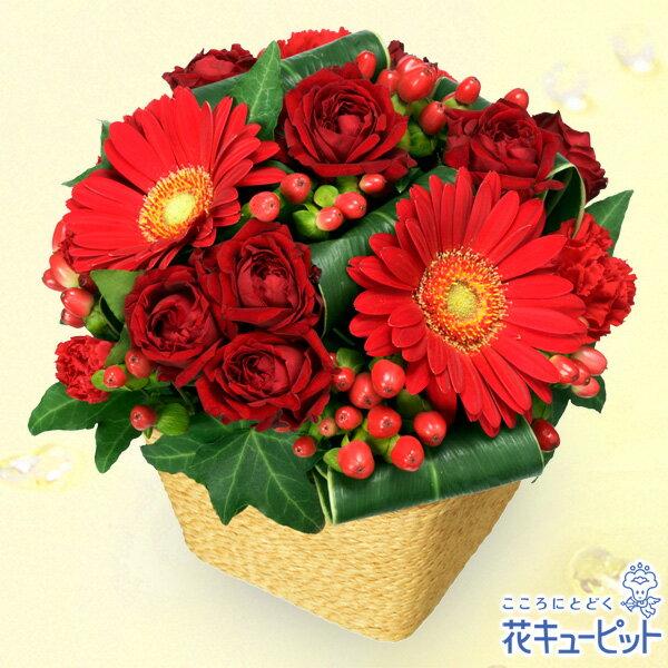花キューピットペット用フラワーギフト・お祝い赤ガーベラと赤バラのアレンジメントnf01-511507