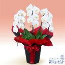 花キューピット【開店祝い・開業祝い】yf00-511512胡蝶蘭 3本立(開花輪白18以上)赤系ラッピング