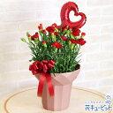 花キューピット【母の日ギフト】mt01yr-521246カーネーション鉢(赤)