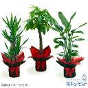 花キューピット【お花屋さんがお届け!観葉植物】ddg00-kanyou08観葉植物(おまかせ)