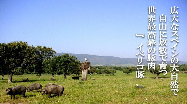 イベリコ豚ロース生姜焼き用400g(約2-3人...の紹介画像3