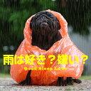 雨は好き?嫌い?