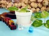 植木鉢1個