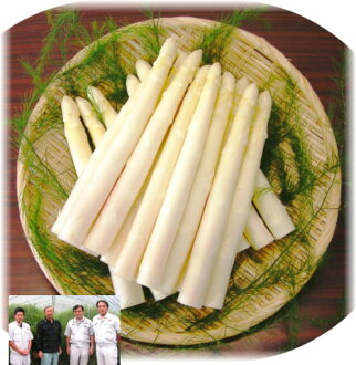 ■ production directly from fresh white asparagus 1 kg size L 36-46