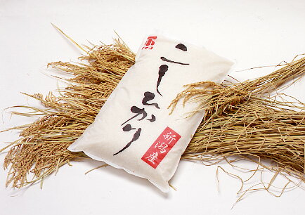 イチコ オリジナルコシヒカリ 5kg