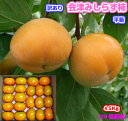 【がんばろう!福島】訳あり 会津みしらず柿平箱・柿・国産(福...