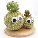 インテリアにいかがですか?癒し系の苔玉エコアニマルツリー癒し系 苔玉 モスビー君(グリーン) ダブル