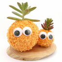 インテリアにいかがですか?癒し系の苔玉エコアニマルツリー癒し系 苔玉 モスビー君(オレンジ) ダブル