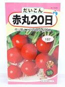 【人気商品】赤丸20日大根(コメット)(だいこん)(種:ウタネ)[ダイコン 種子 種 家庭菜園 大根]
