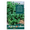 【人気商品】コリアンダー CULTIVE'E (パクチー・香菜) (No.12445)[ハーブ 家庭菜園 種子 種] 【HLS_DU】10P03Sep16