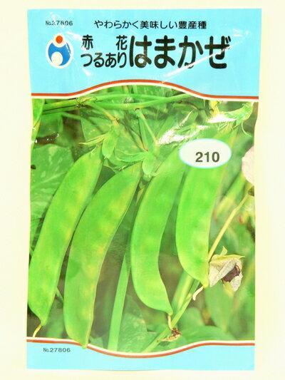 【人気商品】(つるあり)赤花はまかぜ (種:ウタネ)[いんげん 種 エンドウ 家庭菜園 種子]
