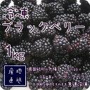冷凍 ブラックベリー 1kg・500g×2パック 国産 和歌山県産 自家栽培 完熟 冷凍果実 冷