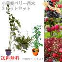 ブラックベリー ラズベリー クランベリー 3種 3鉢セット 母の日 プレゼント 送料無料 鉢花 鉢植え 母の日ギフトフラワー 花 ギフト
