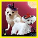 【アクセサリー 犬 猫】iDog&iCat ヘアアクセサリー クリップヘアピン 魔女っ子帽子