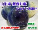 柿渋散布の天然農薬栽培のナス使用 山形県飯豊町産 置賜名物 薄皮丸茄子の粕漬450mlの瓶詰めお試し 東北関東送料無料