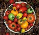 高知県 おかざき農園産 ミニトマト アソート [プティリサ・ジュエルボックス] (ミニトマト5種類以上)化粧箱入 約700g以上