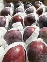 8月中旬から10月までの発送!【贈答用】【予約特別価格】信州産 完熟 品種おまかせ生プルーン 約2k 果物箱入り