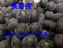 9月下旬より発送!【予約販売】【数量限定】【贈答用】長野産 ナガノパープル(シナノパープル) 約2k
