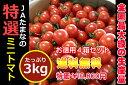 ☆全国最大級の生産地からお届け☆『ミニトマト・たっぷり3kg』を4箱【送料無料】