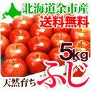 りんごふじ 5kg(16〜18個)北海道余市産 有機質肥料使用エコファーマー認定農園のリンゴ 果物 フルーツ 贈り物 内祝 ギフト 送料無料 秋の味覚