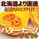 バターナッツ かぼちゃ 1個 北海道産 カボチャ 南瓜 秋の味覚 ハロウィン