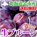 生 プルーン 4パック(各約400g) 北海道 余市産 プラム 果物 フルーツ 贈り物 ギフト お取り寄せ 送料無料 秋の味覚