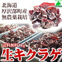料理が楽しくなる 【 生きくらげ 国産 1kg 】 北海道産 無農薬 菌床 栽培 温泉熱利用