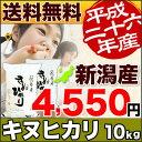 キヌヒカリ26年産新潟県産キヌヒカリ5kg×2袋(10kg)【送料無料(一部地域除く)】きぬひかり