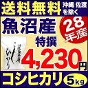 28年 特撰 新潟県 魚沼産コシヒカリ 5kg 米 【送料無料】(沖縄・佐渡を除く)