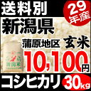 【新米】新潟産コシヒカリ 山並 30kg 玄米 29年産 米 【送料別】