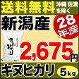 新米 28年産 新潟産 キヌヒカリ5kg きぬひかり 【送料無料】(沖縄・佐渡を除く)
