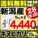 新米 28年産 キヌヒカリ 新潟県産 10kg(5kg×2袋)【送料無料】(沖縄・佐渡を除く)