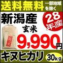 新米 28年産 新潟県産 キヌヒカリ 30kg 玄米【送料無料】(一部地域を除く)