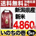 【ありがとう三米】新潟県産いのちの壱 5kg H28年産 米 【送料無料】(沖縄・佐渡を除く)