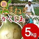 予約商品【送料無料】淡路島新たまねぎ #かくし玉 5K#