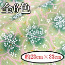 C41-dg-23no400