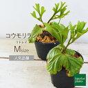 流行りのボタニカルでインスタ映え間違いなし!お部屋に植物を飾ってみませんか?
