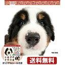 THE DOG 2018年 カレンダー バーニーズマウンテンドッグ