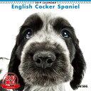 【送料無料】【あす楽】THE DOG 2019年 カレンダー イングリッシュコッカースパニエル