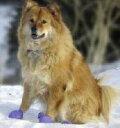ラバーブーツ(サイズ:XL) 犬靴 犬用靴 犬の靴 ドッ