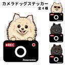 ショッピングドライブレコーダー ポメラニアン ステッカー カメラドッグ 犬 犬屋 いぬや ドライブレコーダー